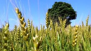 小麦色の肌